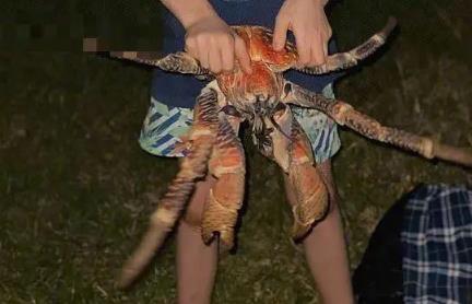 【可惜】家庭烧烤时爬来50多只大螃蟹 网友:天降大餐