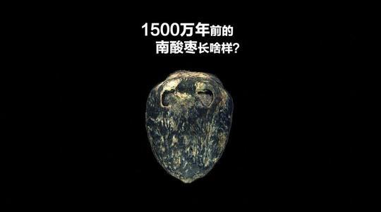 【热议】1500万年前的枣被发现 网友:啥味道的